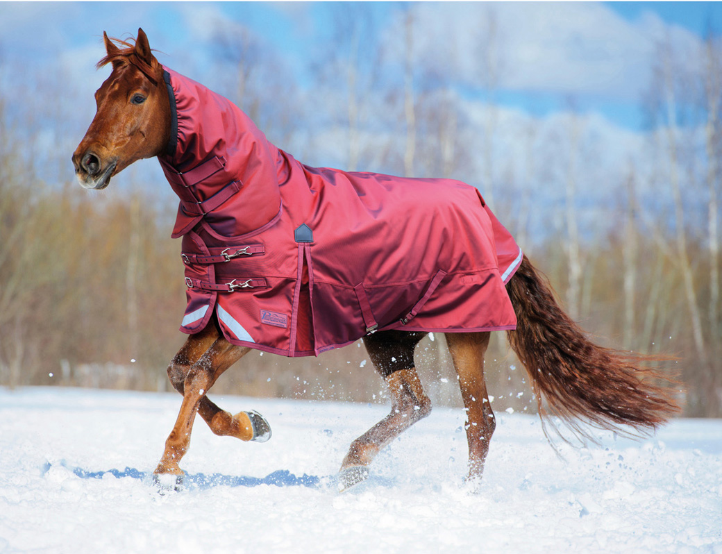 Chestnut horse runs gallop in winter